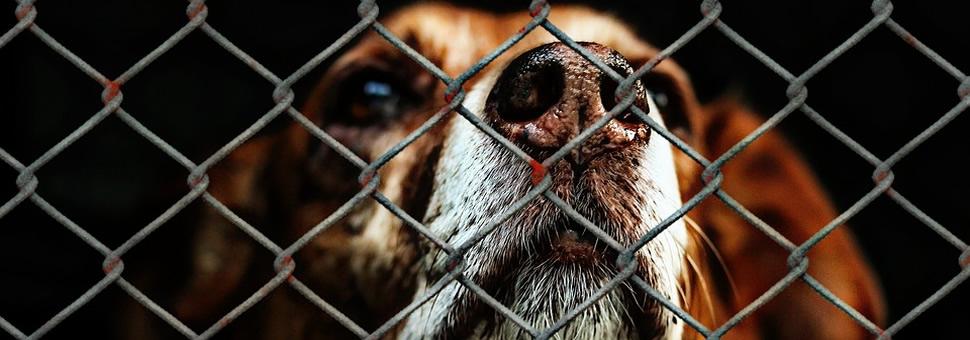 Atención :  mensaje viral contra el maltrato animal busca impugnar el voto